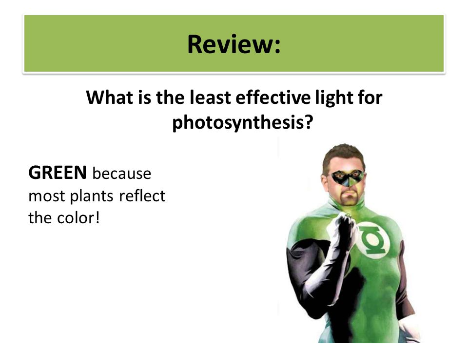 What is the least effective light for photosynthesis GREEN because most plants reflect the color!