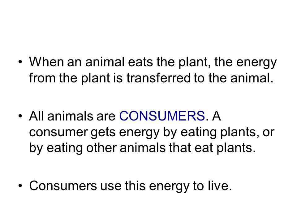 When an animal eats the plant, the energy from the plant is transferred to the animal.