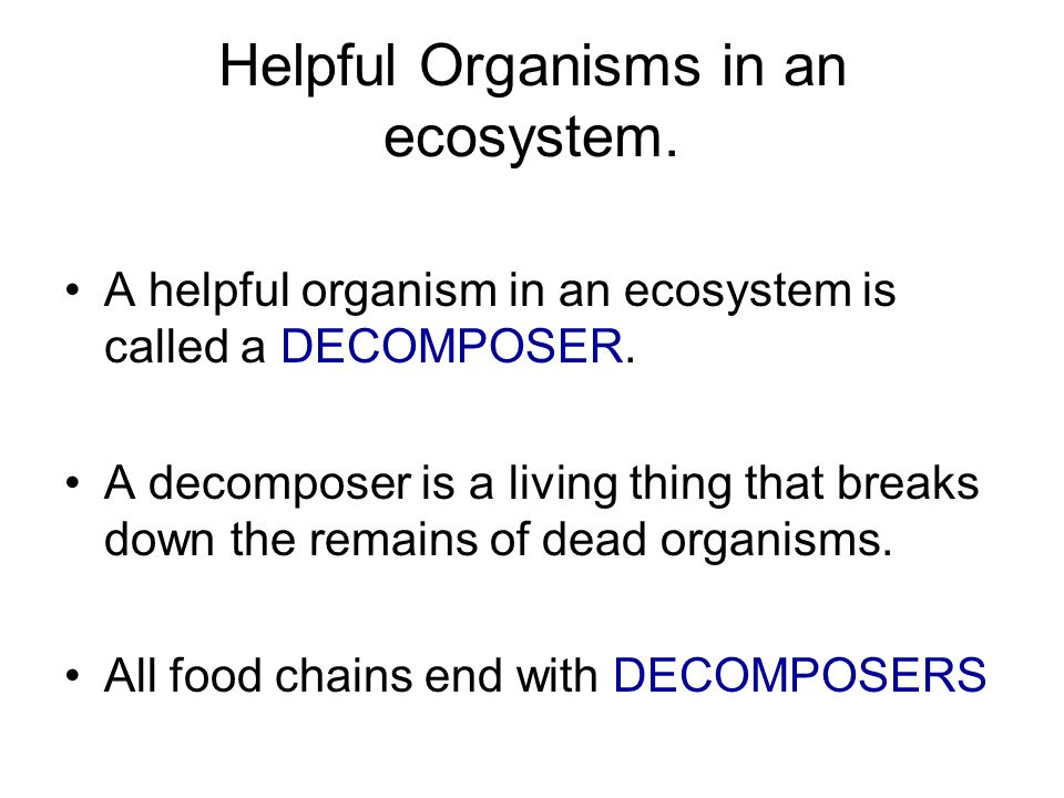 Helpful Organisms in an ecosystem.A helpful organism in an ecosystem is called a DECOMPOSER.