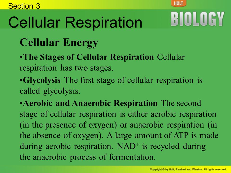 Section 3 Cellular Respiration Cellular Energy The Stages of Cellular Respiration Cellular respiration has two stages. Glycolysis The first stage of c