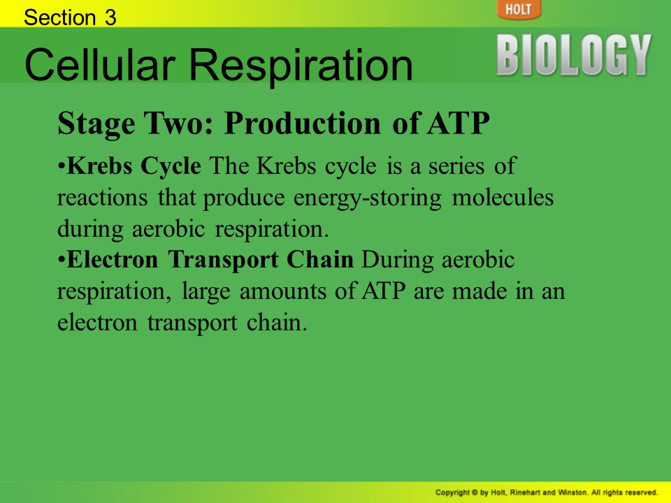 Section 3 Cellular Respiration Stage Two: Production of ATP Krebs Cycle The Krebs cycle is a series of reactions that produce energy-storing molecules