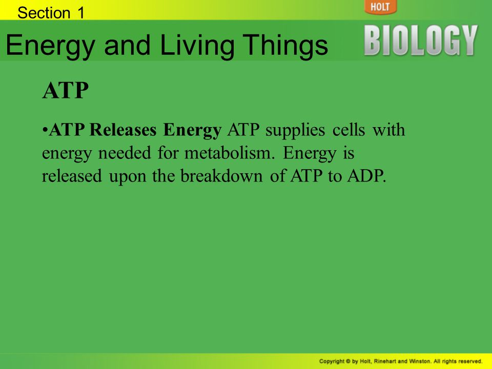 Section 1 Energy and Living Things ATP ATP Releases Energy ATP supplies cells with energy needed for metabolism. Energy is released upon the breakdown