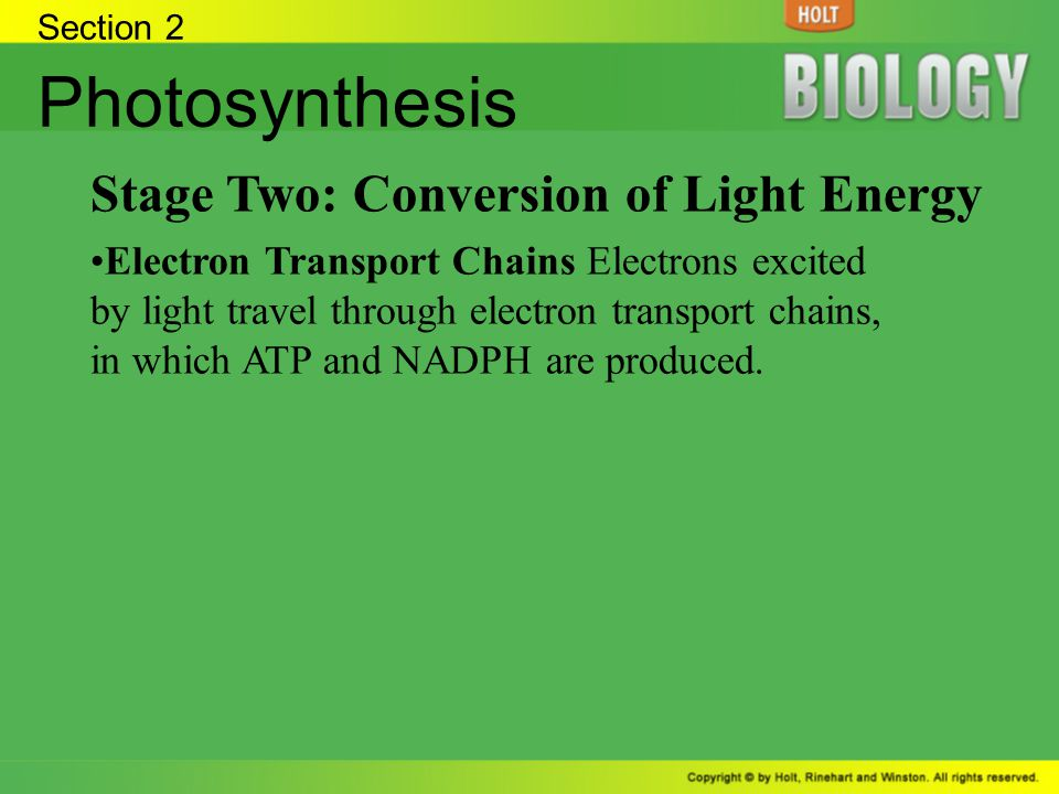 Section 2 Photosynthesis Stage Two: Conversion of Light Energy Electron Transport Chains Electrons excited by light travel through electron transport