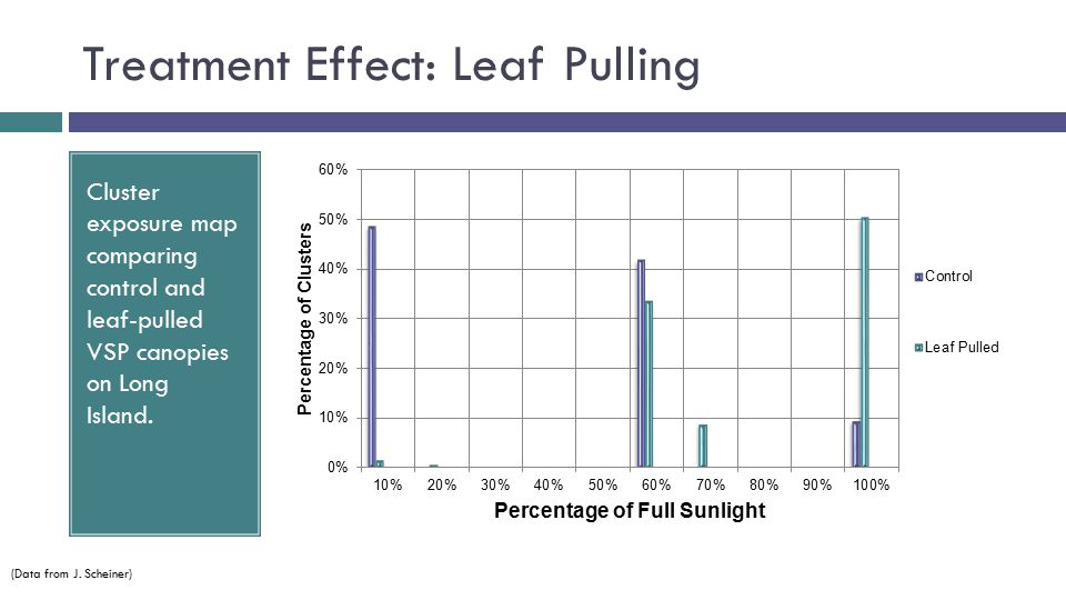 Treatment Effect: Leaf Pulling Cluster exposure map comparing control and leaf-pulled VSP canopies on Long Island.