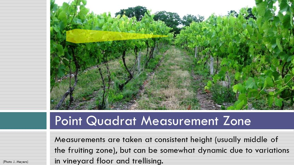 Measurements are taken at consistent height (usually middle of the fruiting zone), but can be somewhat dynamic due to variations in vineyard floor and trellising.
