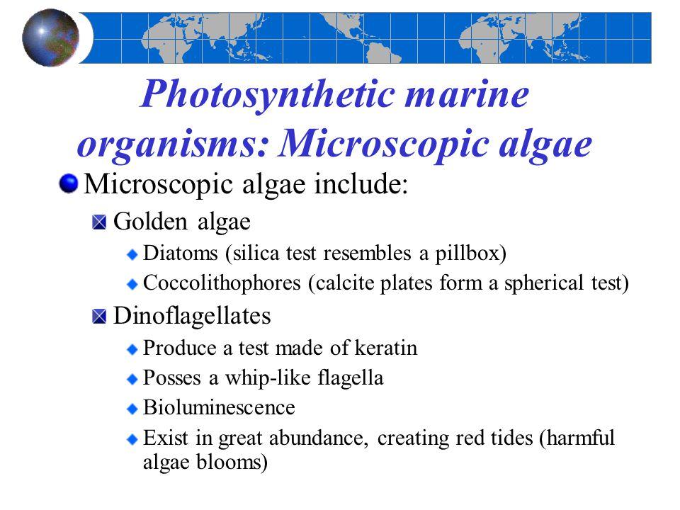 Photosynthetic marine organisms: Microscopic algae Microscopic algae include: Golden algae Diatoms (silica test resembles a pillbox) Coccolithophores