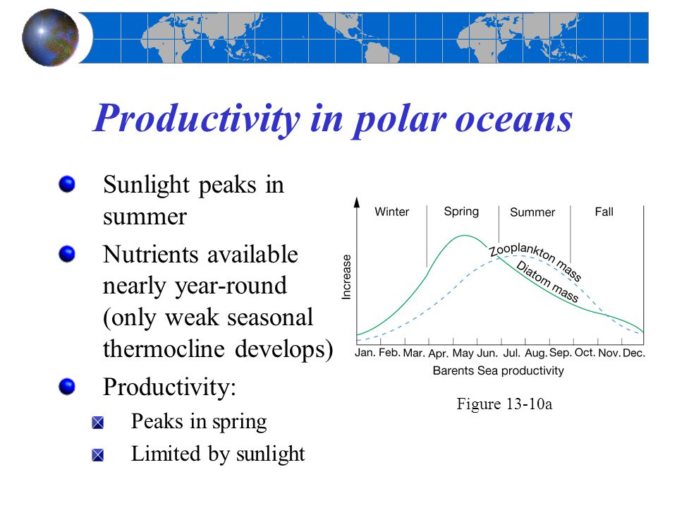 Productivity in polar oceans Sunlight peaks in summer Nutrients available nearly year-round (only weak seasonal thermocline develops) Productivity: Pe