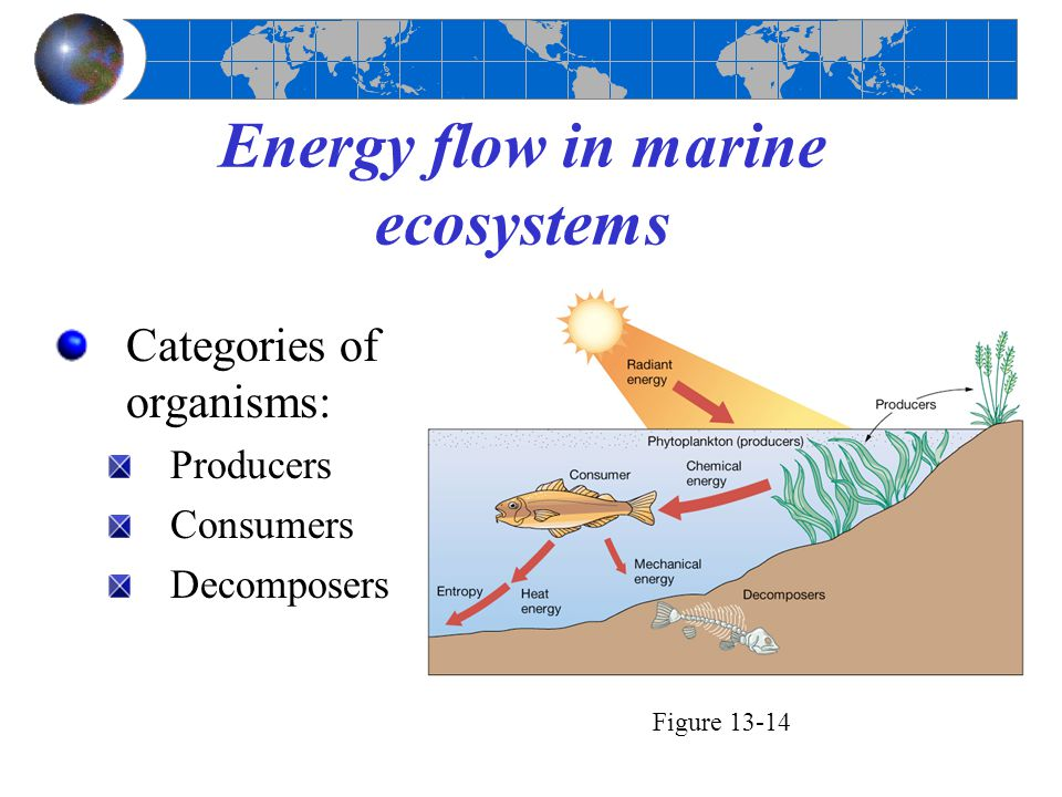 Energy flow in marine ecosystems Categories of organisms: Producers Consumers Decomposers Figure 13-14
