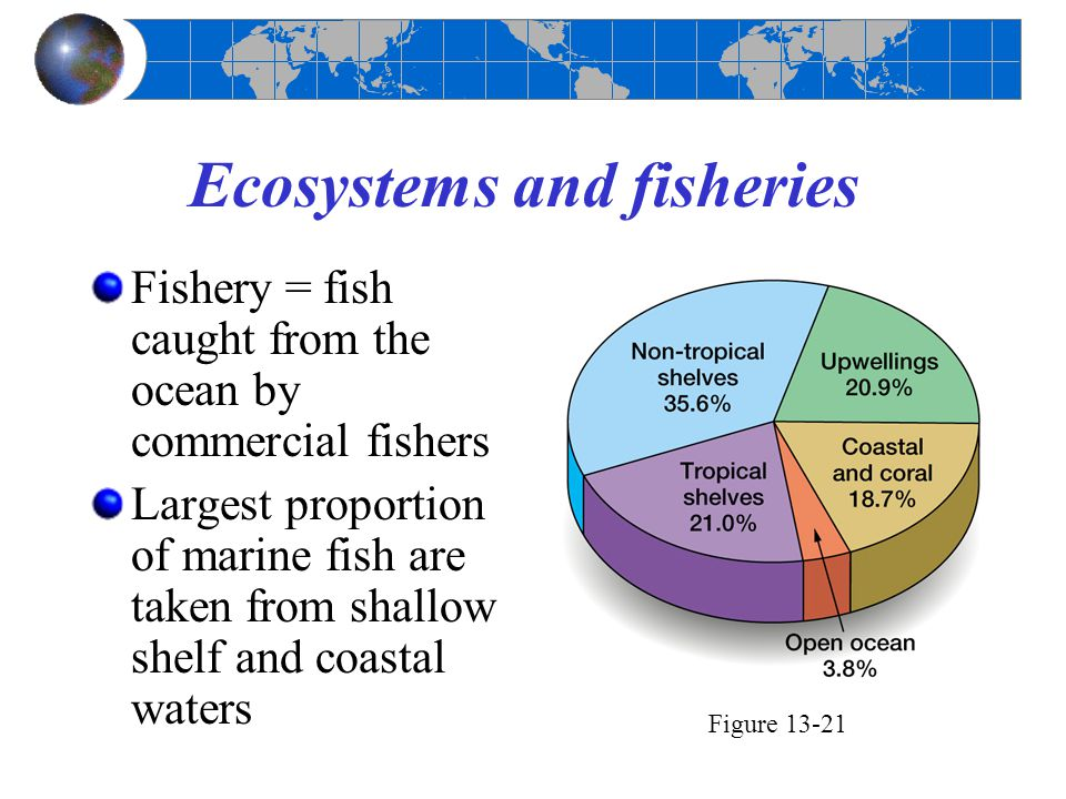 Ecosystems and fisheries Fishery = fish caught from the ocean by commercial fishers Largest proportion of marine fish are taken from shallow shelf and