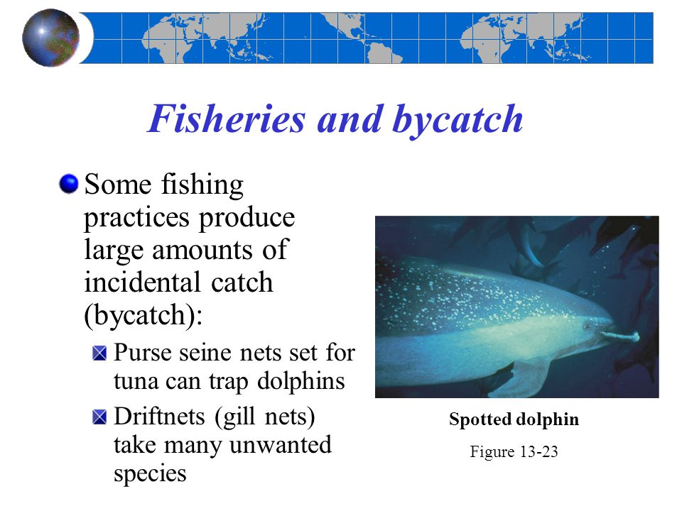 Fisheries and bycatch Some fishing practices produce large amounts of incidental catch (bycatch): Purse seine nets set for tuna can trap dolphins Drif