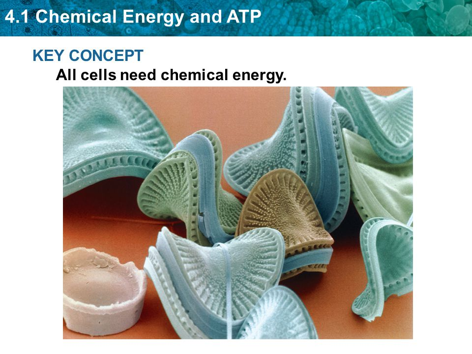 4.1 Chemical Energy and ATP The chemical energy used for most cell processes is carried by ATP.