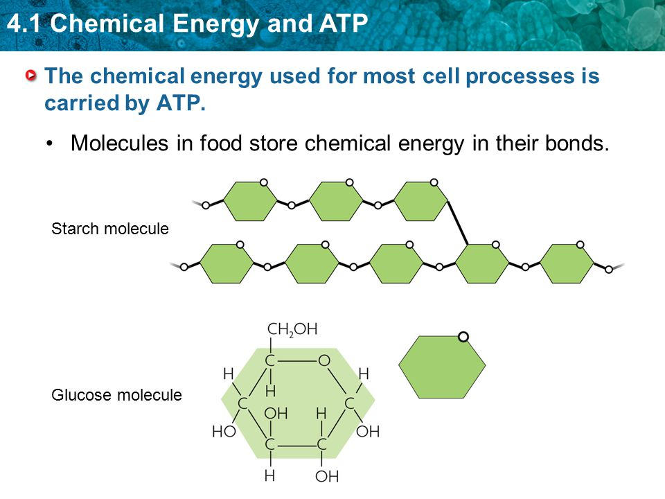 4.1 Chemical Energy and ATP The first stage of photosynthesis captures and transfers energy.