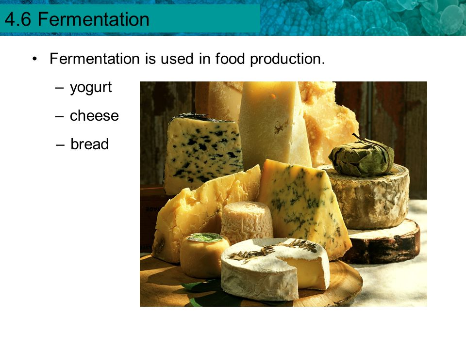 4.1 Chemical Energy and ATP Fermentation is used in food production. –yogurt –cheese –bread 4.6 Fermentation