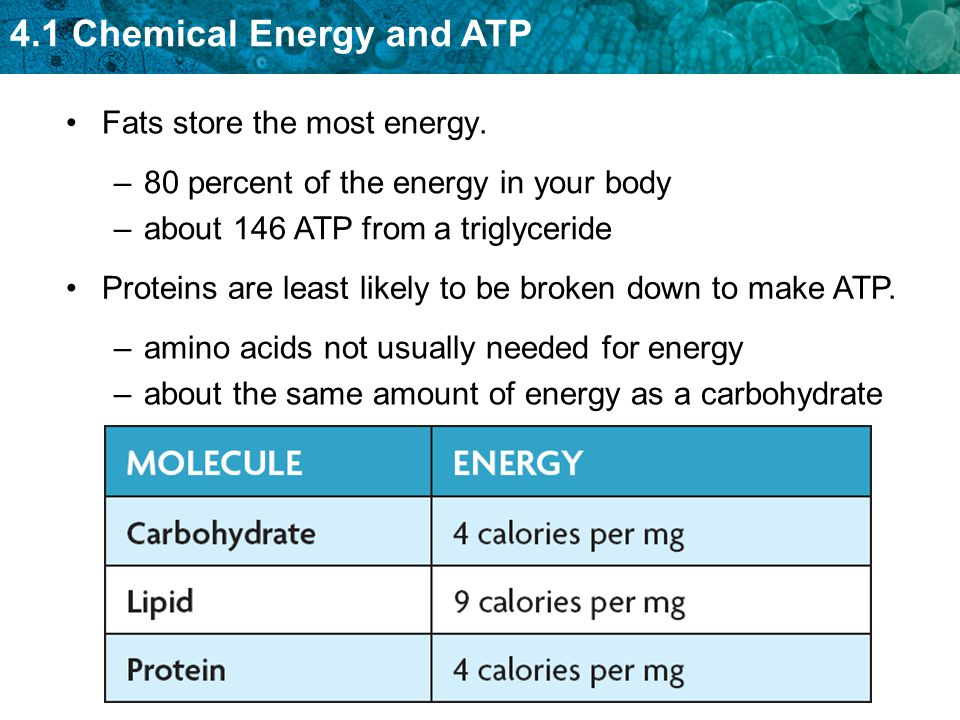 4.1 Chemical Energy and ATP A few types of organisms do not need sunlight and photosynthesis as a source of energy.