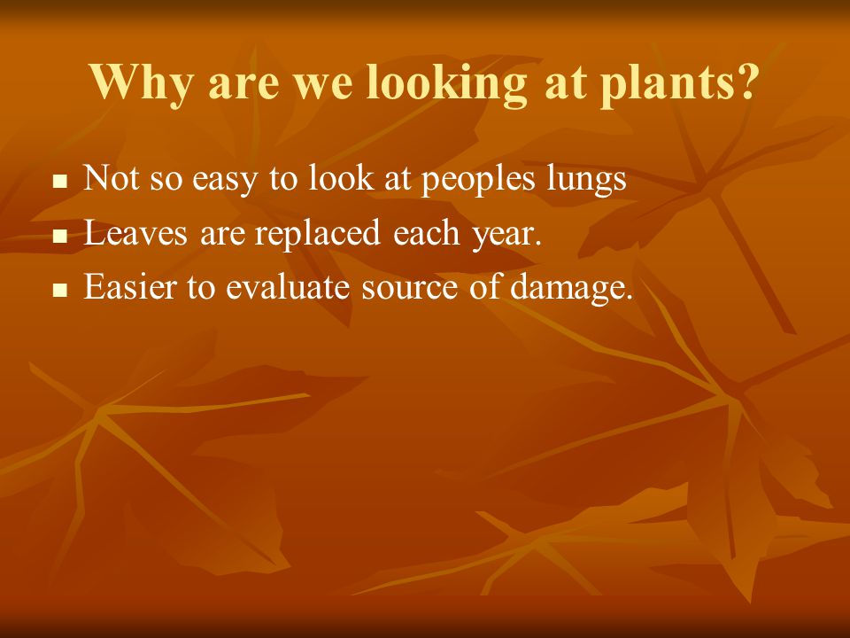 Why are we looking at plants. Not so easy to look at peoples lungs Leaves are replaced each year.
