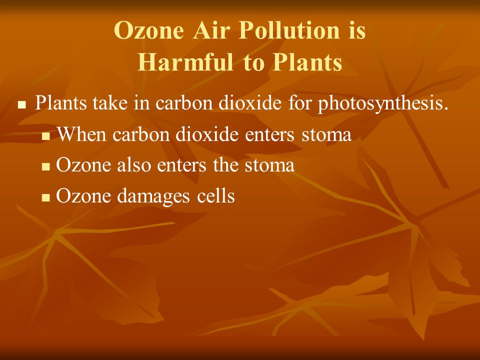 Ozone Air Pollution is Harmful to Plants Plants take in carbon dioxide for photosynthesis. When carbon dioxide enters stoma Ozone also enters the stom