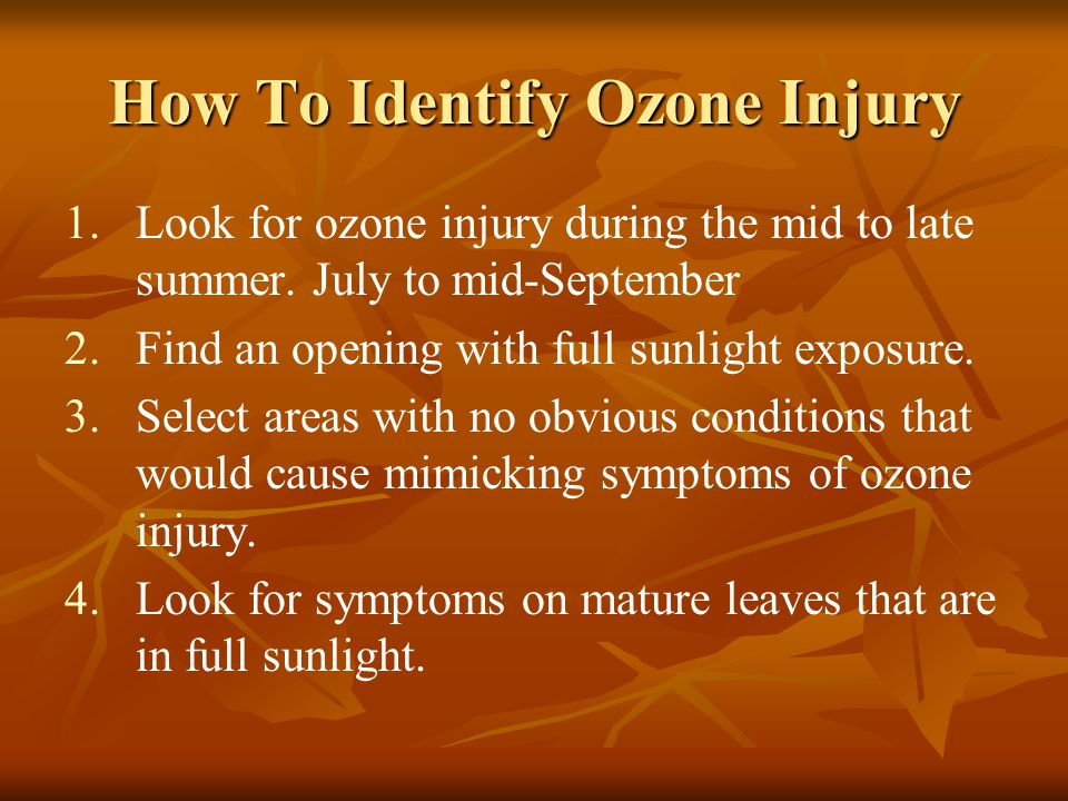 How To Identify Ozone Injury 1. 1.Look for ozone injury during the mid to late summer. July to mid-September 2. 2.Find an opening with full sunlight e