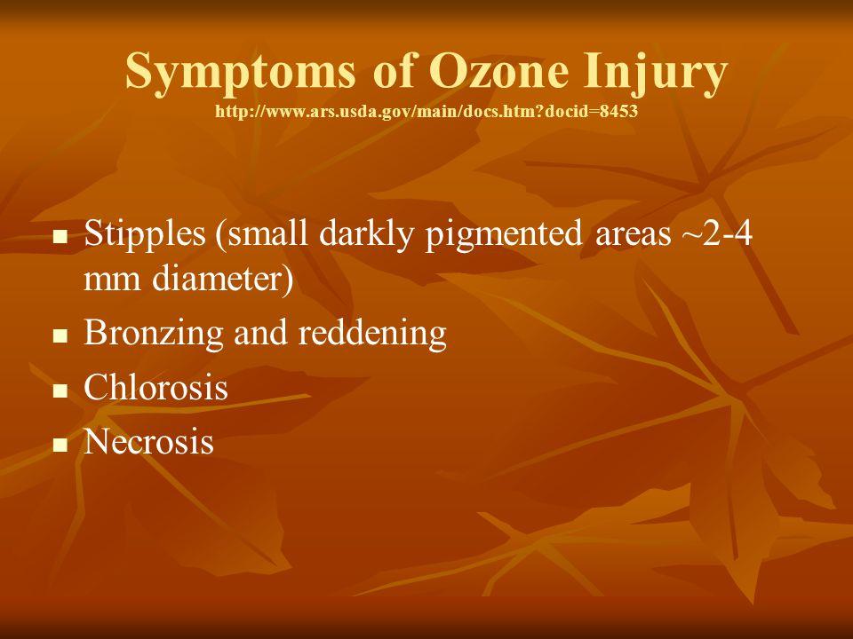Symptoms of Ozone Injury http://www.ars.usda.gov/main/docs.htm?docid=8453 Stipples (small darkly pigmented areas ~2-4 mm diameter) Bronzing and reddening Chlorosis Necrosis