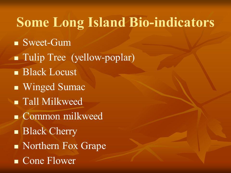 Some Long Island Bio-indicators Sweet-Gum Tulip Tree (yellow-poplar) Black Locust Winged Sumac Tall Milkweed Common milkweed Black Cherry Northern Fox Grape Cone Flower