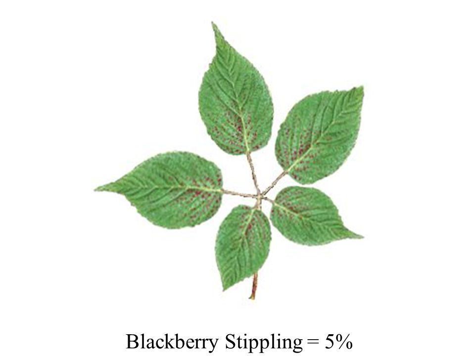 Blackberry Stippling = 5%