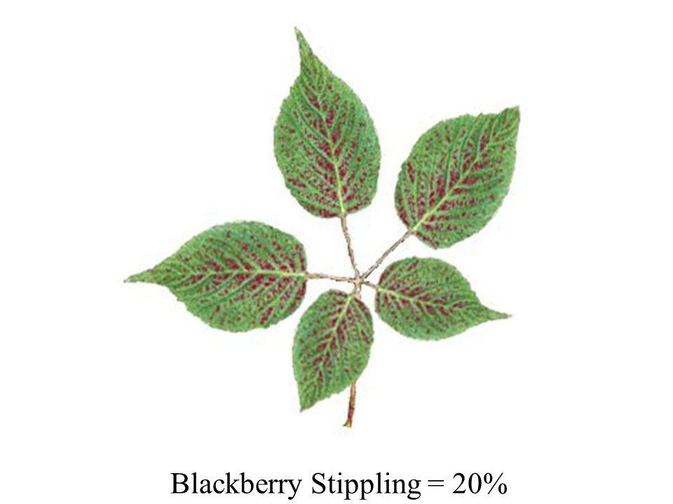 Blackberry Stippling = 20%