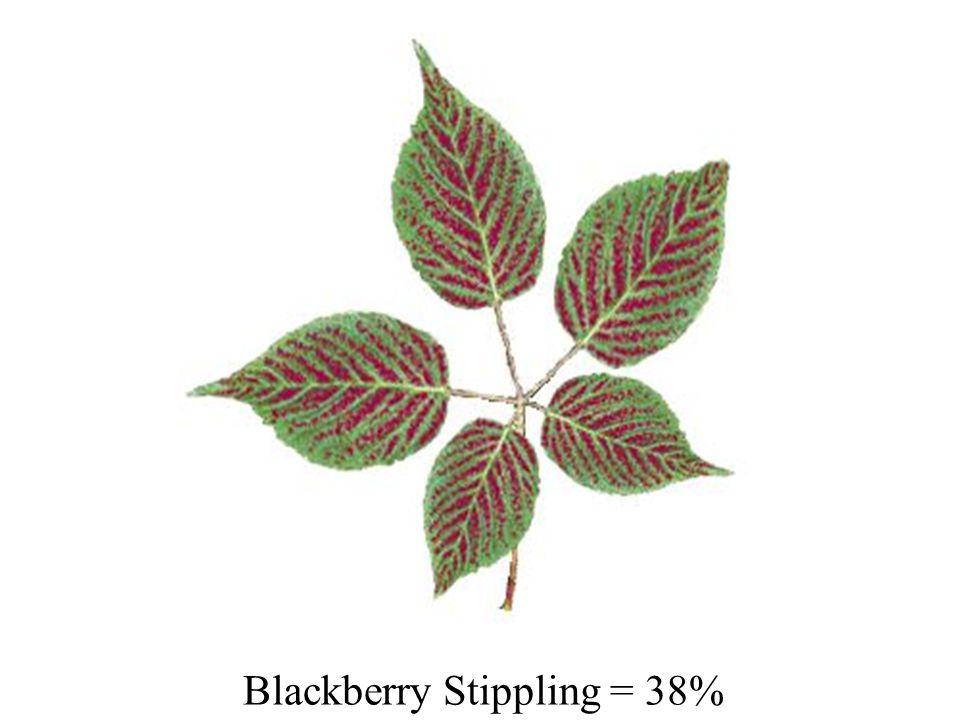 Blackberry Stippling = 38%