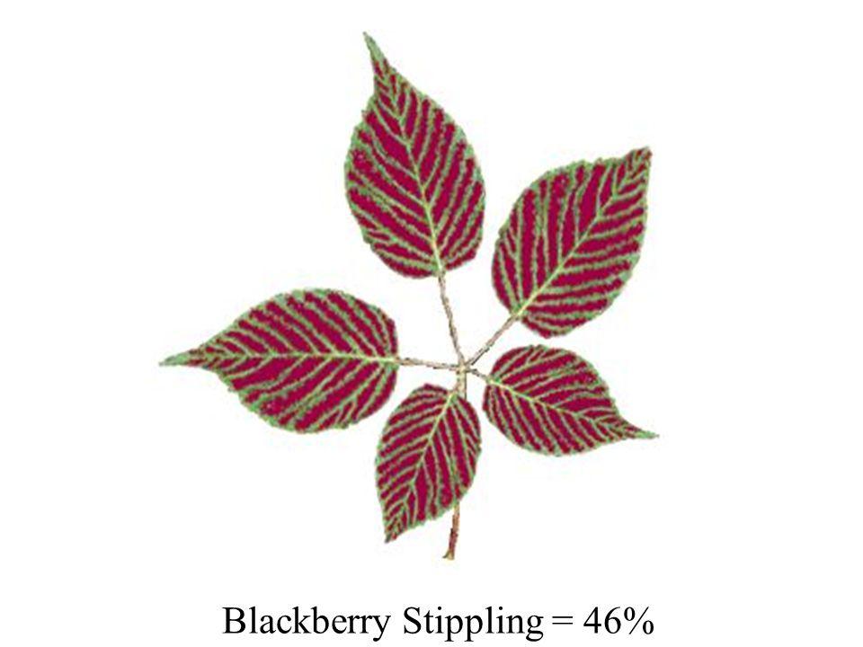 Blackberry Stippling = 46%