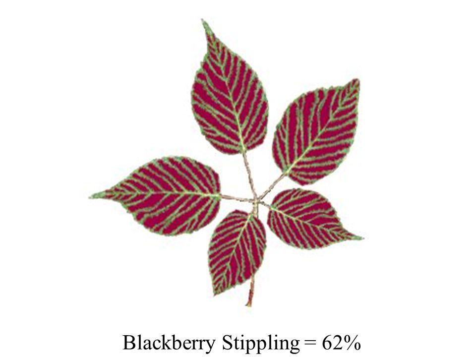 Blackberry Stippling = 62%