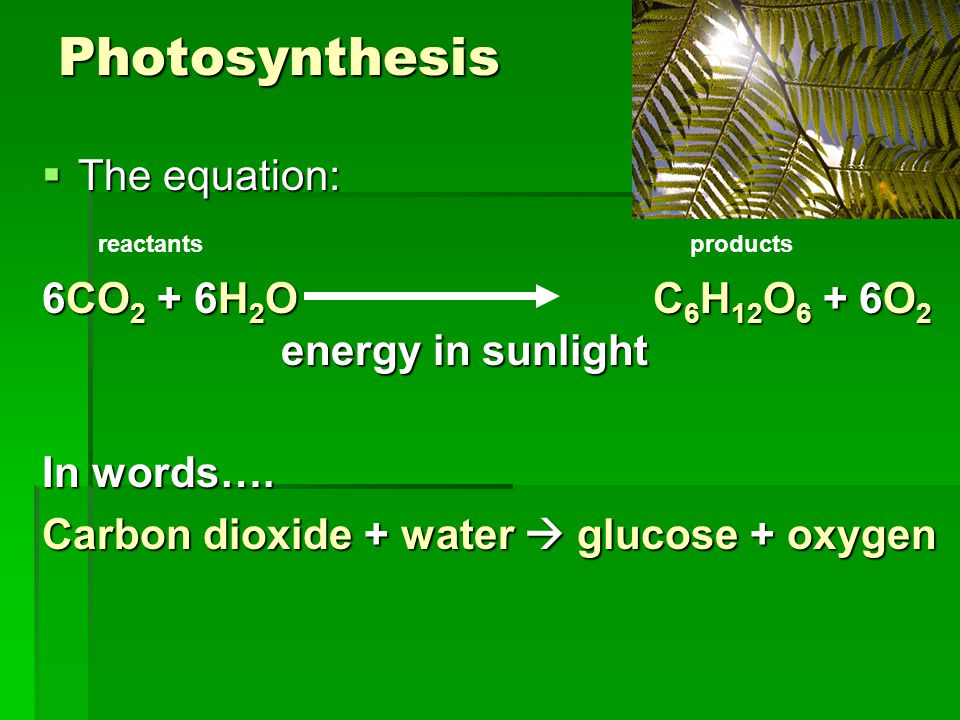 Photosynthesis  The equation: 6CO 2 + 6H 2 O C 6 H 12 O 6 + 6O 2 energy in sunlight In words….