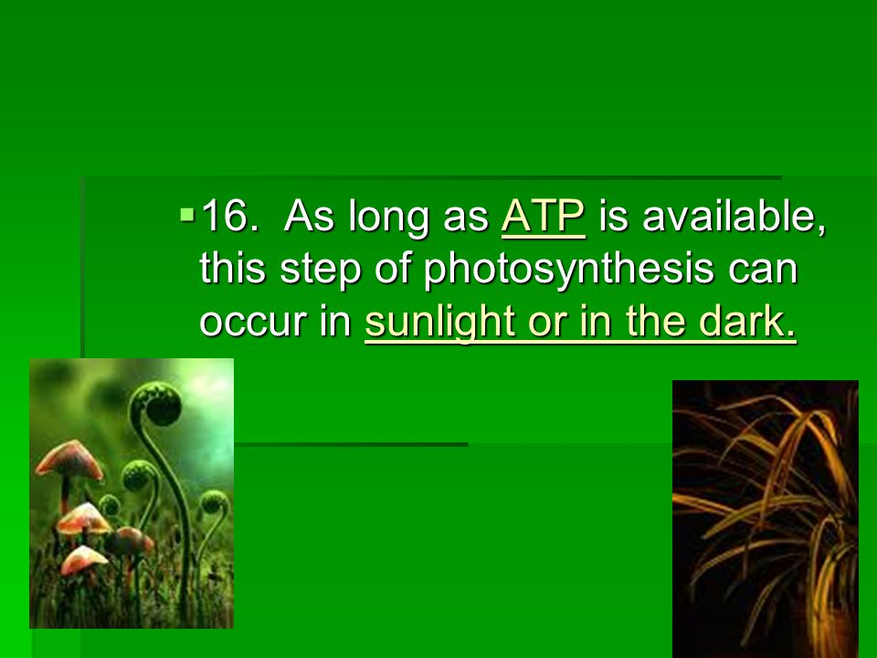  16. As long as ATP is available, this step of photosynthesis can occur in sunlight or in the dark.