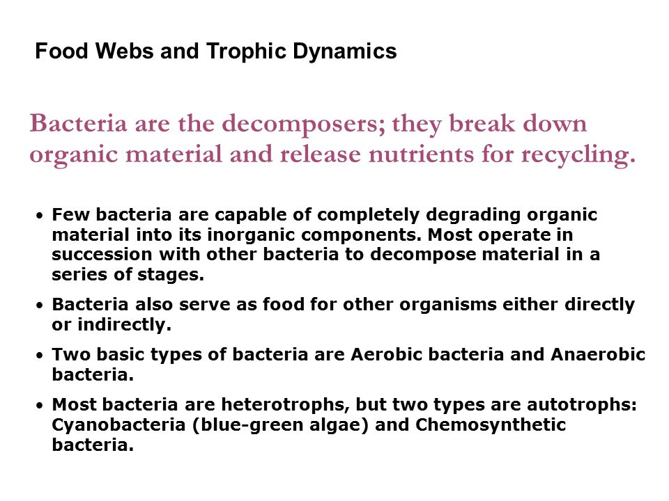 Bacteria are the decomposers; they break down organic material and release nutrients for recycling.