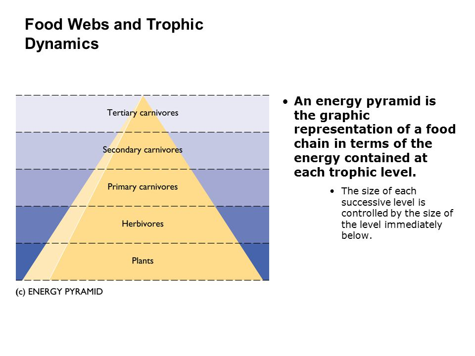 An energy pyramid is the graphic representation of a food chain in terms of the energy contained at each trophic level. The size of each successive le