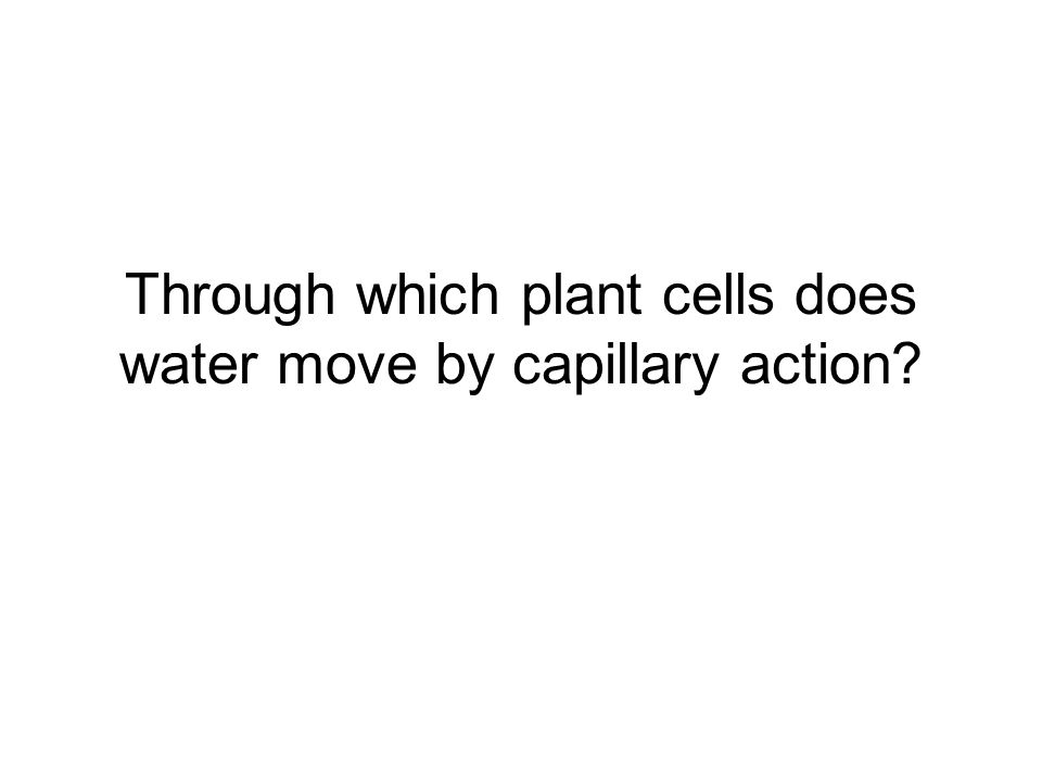 Through which plant cells does water move by capillary action?