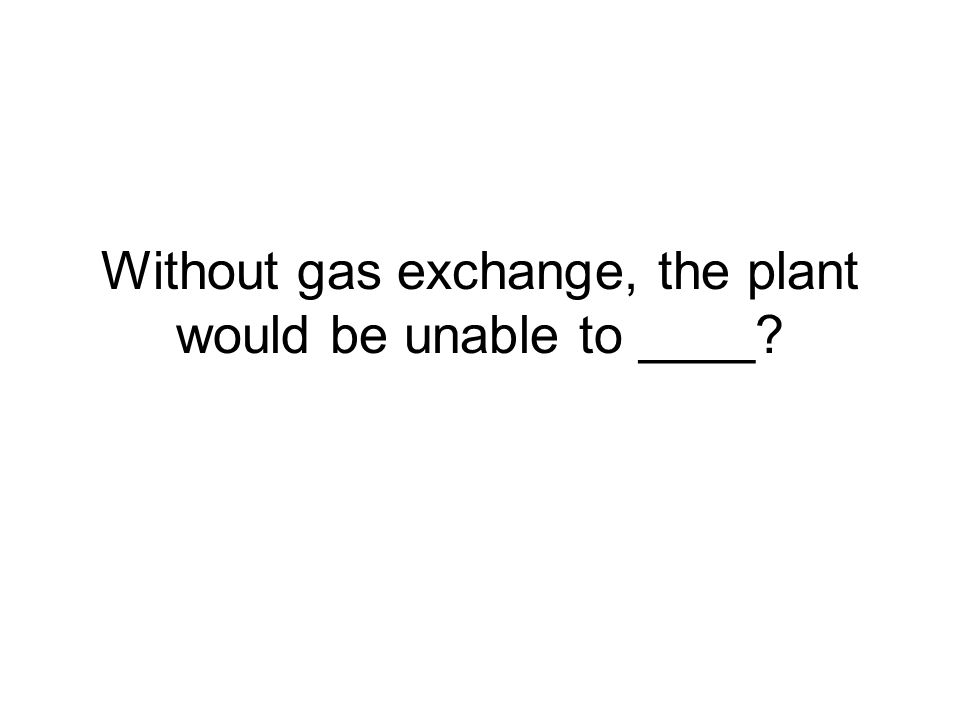 Without gas exchange, the plant would be unable to ____?