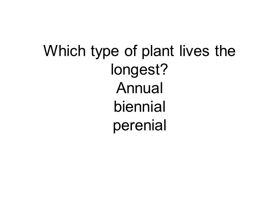 Which type of plant lives the longest? Annual biennial perenial