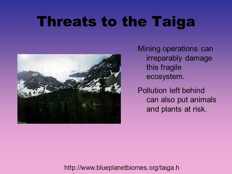 Threats to the Taiga Mining operations can irreparably damage this fragile ecosystem.