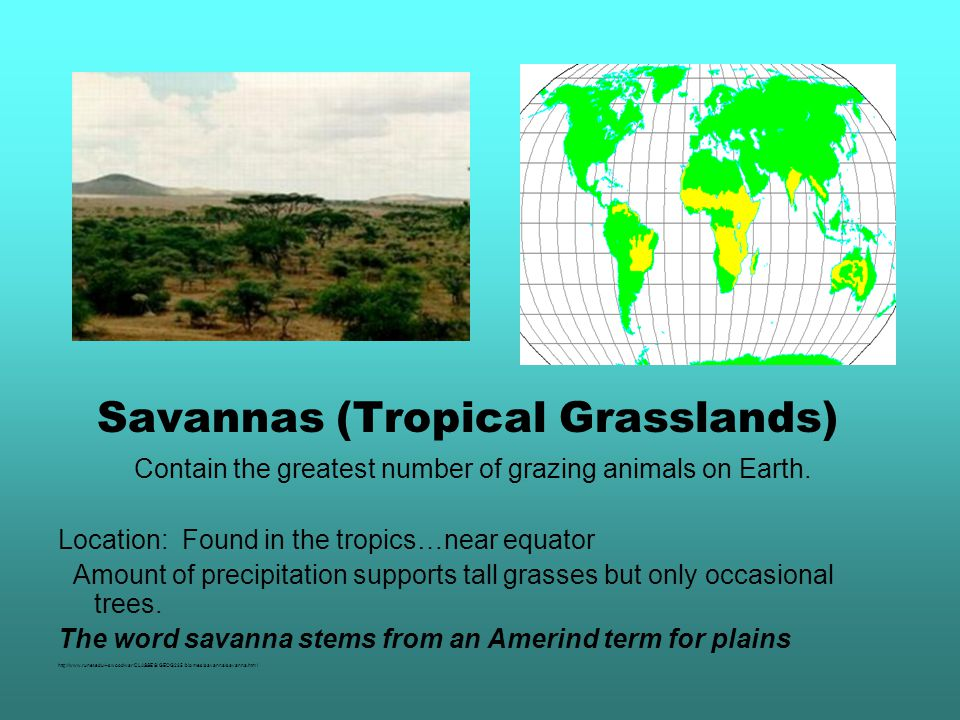 Savannas (Tropical Grasslands) Contain the greatest number of grazing animals on Earth.
