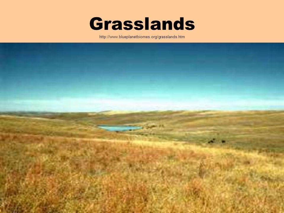 Grasslands http://www.blueplanetbiomes.org/grasslands.htm