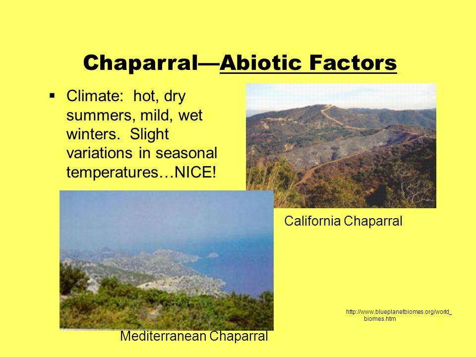 Chaparral—Abiotic Factors  Climate: hot, dry summers, mild, wet winters.