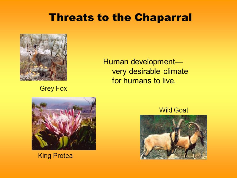Threats to the Chaparral Human development— very desirable climate for humans to live.