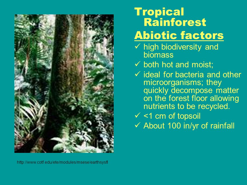 Tropical Rainforest Abiotic factors high biodiversity and biomass both hot and moist; ideal for bacteria and other microorganisms; they quickly decompose matter on the forest floor allowing nutrients to be recycled.