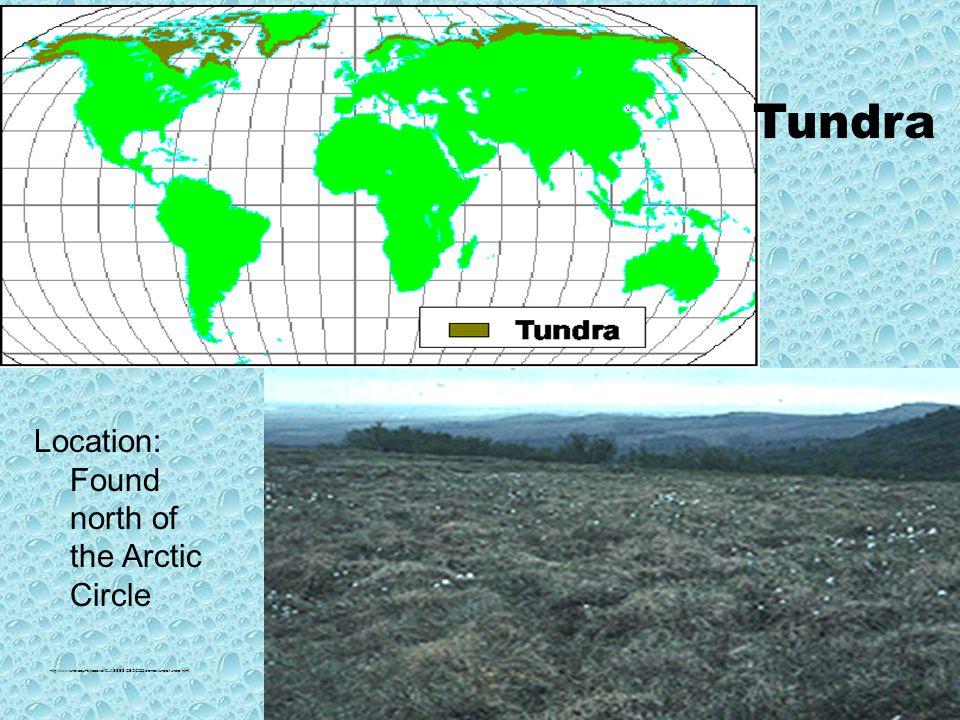 http://www.runet.edu/~swoodwar/CLASSES/GEOG235/biomes/tundra/tundra.html Tundra Location: Found north of the Arctic Circle