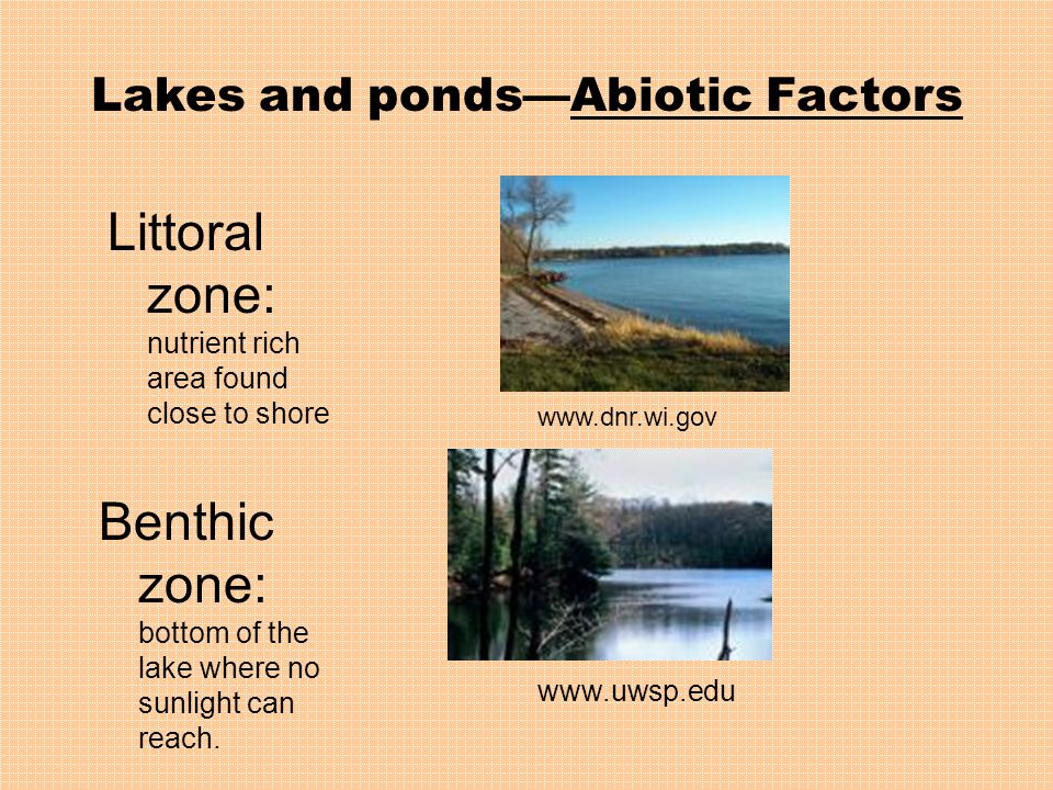 Lakes and ponds—Abiotic Factors Littoral zone: nutrient rich area found close to shore Benthic zone: bottom of the lake where no sunlight can reach.