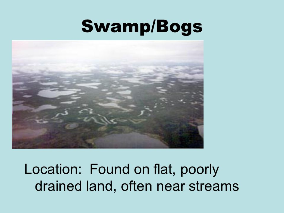 Swamp/Bogs Location: Found on flat, poorly drained land, often near streams