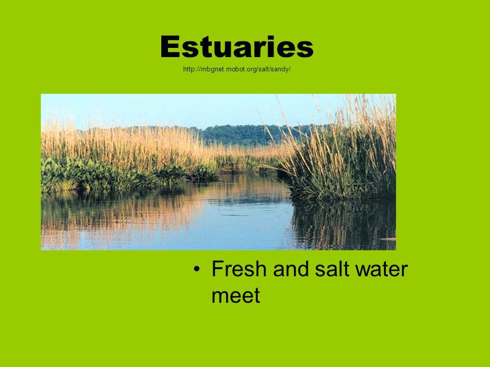 Estuaries http://mbgnet.mobot.org/salt/sandy/ Fresh and salt water meet
