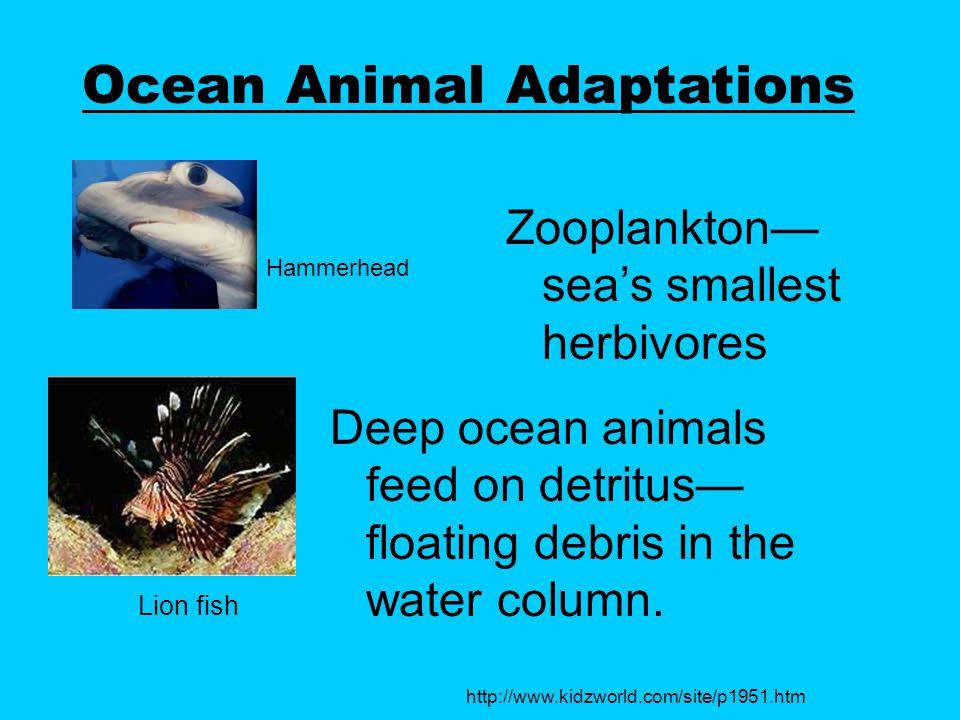 Ocean Animal Adaptations Zooplankton— sea's smallest herbivores Deep ocean animals feed on detritus— floating debris in the water column.
