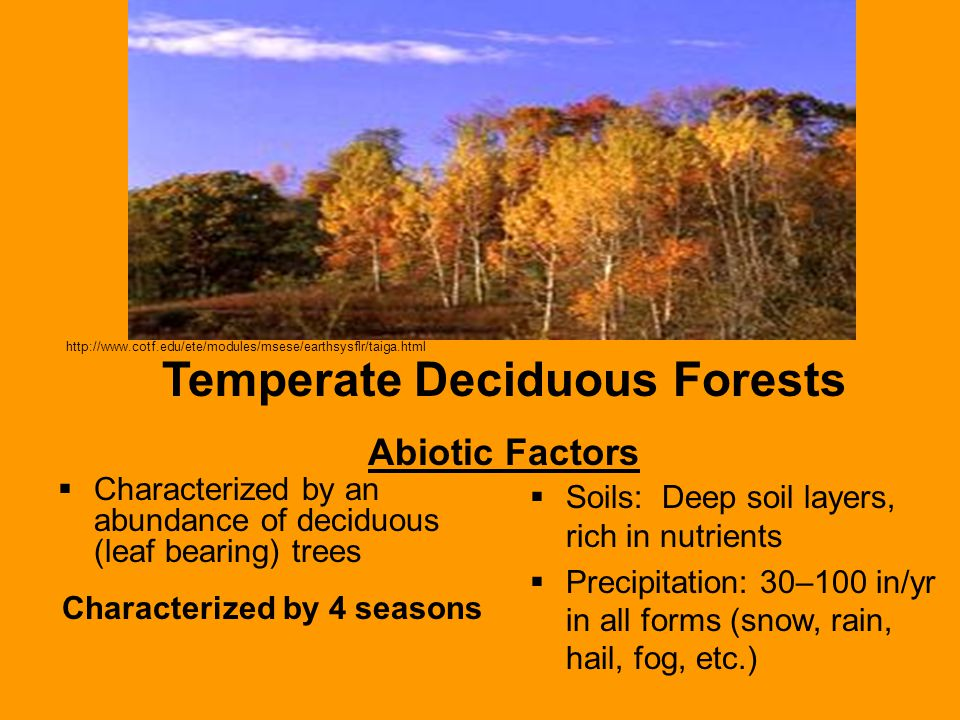 Characterized by an abundance of deciduous (leaf bearing) trees Characterized by 4 seasons  Soils: Deep soil layers, rich in nutrients  Precipitation: 30–100 in/yr in all forms (snow, rain, hail, fog, etc.) Temperate Deciduous Forests Abiotic Factors http://www.cotf.edu/ete/modules/msese/earthsysflr/taiga.html