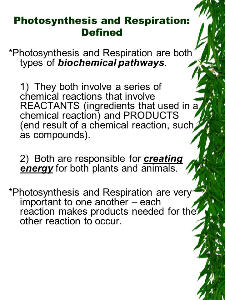 Photosynthesis and Respiration: Defined *Photosynthesis and Respiration are both types of biochemical pathways.