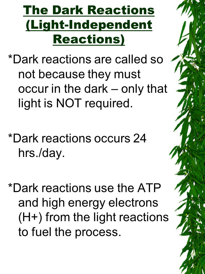 The Dark Reactions (Light-Independent Reactions) *Dark reactions are called so not because they must occur in the dark – only that light is NOT required.