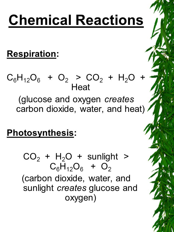 Chemical Reactions Respiration: C 6 H 12 O 6 + O 2 > CO 2 + H 2 O + Heat (glucose and oxygen creates carbon dioxide, water, and heat) Photosynthesis: CO 2 + H 2 O + sunlight > C 6 H 12 O 6 + O 2 (carbon dioxide, water, and sunlight creates glucose and oxygen)